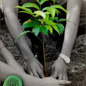 Regala Un árbol