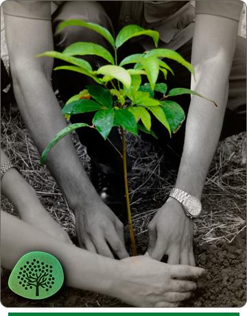 regala-un-arbol-natura