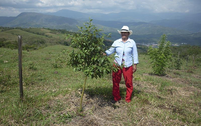 REDD+ Corredor Robles Santander Fundación Natura