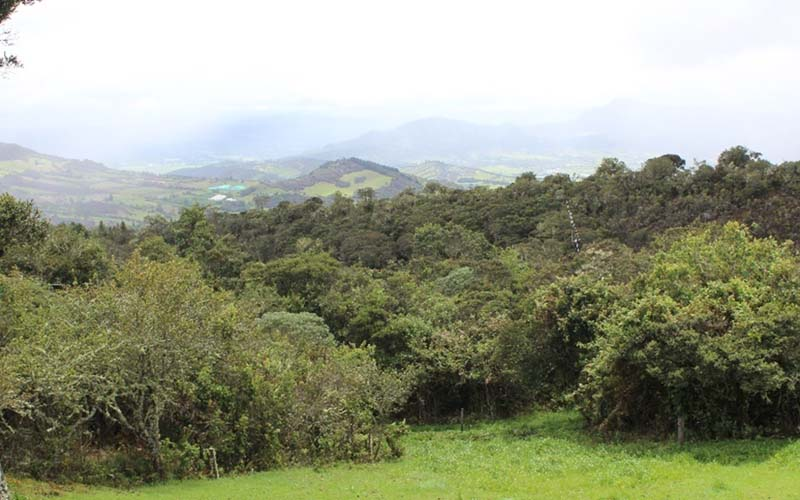 Guasca Bosques Andinos Relictuales Entre PNN Chingaza Y Reserva Biológica Encenillo