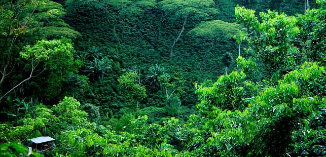 Nace Nueva Guía Para Anidación De Proyectos Que Reducen La Deforestación