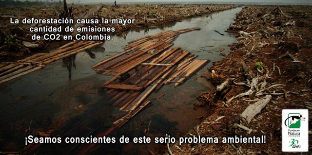 Tala De Bosques Aumenta Huella De Carbono En Colombia