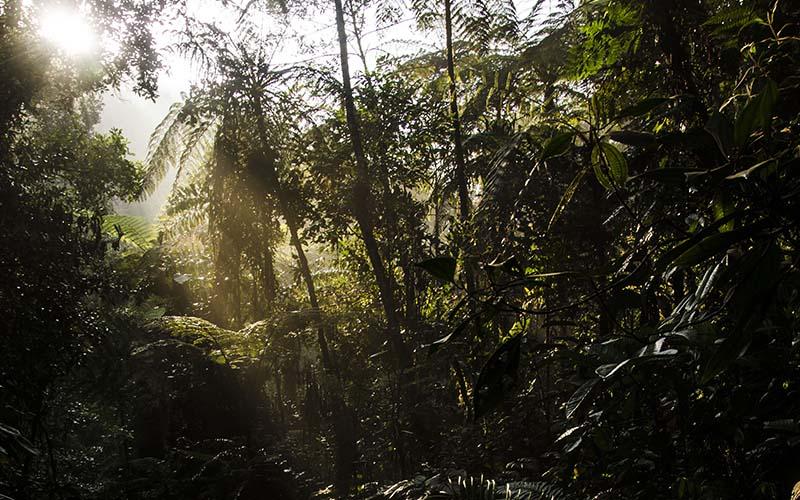 Proyecto Yariuies Fundacion Natura