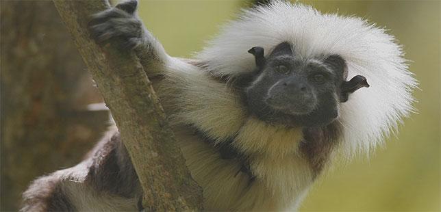 Las Especies De Fauna Deben Ser Prioritariasen Los Procesos De Restauración Ecológicaen Colombia