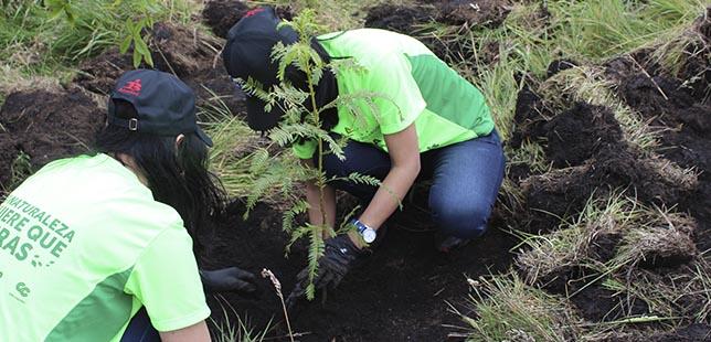 26.500 árboles Fueron Sembrados En Colombia Gracias A La Carrera Verde