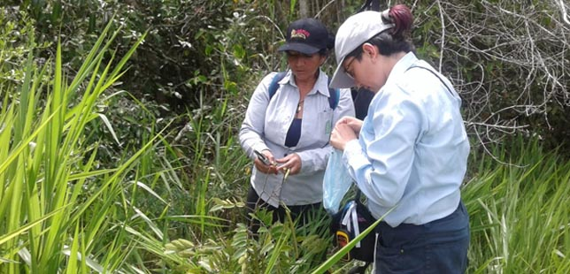 Instituto Humboldt Recolecta Germoplasma En La Zona De Restauración Ecológica De El Quimbo Para Conservación De Especies Del Bosque Seco Tropical