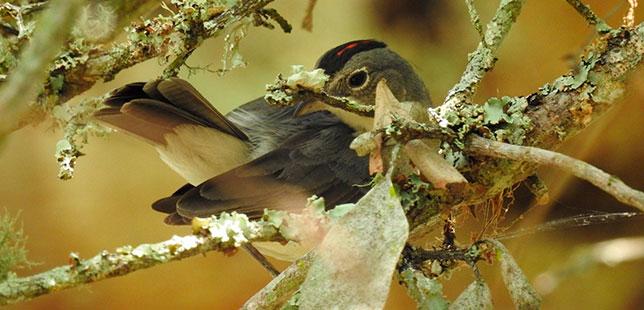 Observación De Aves En El Bosque Seco Puede Contribuir A Fomentar El Ecoturismo En El Centro Del Huila