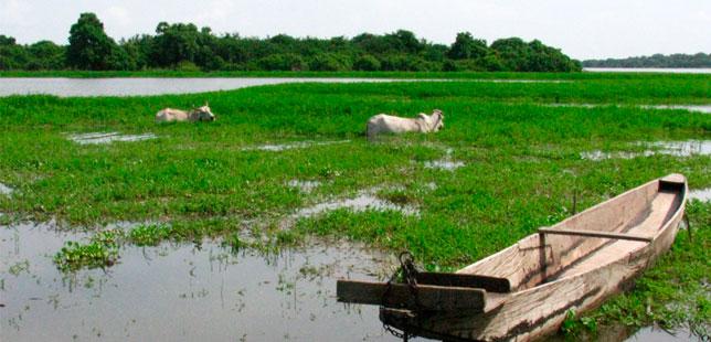 Modelo Ecohidrológico En La Ciénaga De Zapatosa, Un Caso Ejemplar Para La Conservación En América Latina