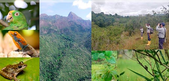 Una Aproximación Al Ecosistema De Bosque Seco Tropical, Uno De Los Más Transformados En Colombia