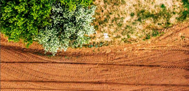 Recomendaciones Para La Implementación De Acuerdos Cero Deforestación En Los Sectores Palmicultor Y Ganadero En Colombia