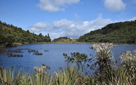 Compensaciones ambientales regional andina-CENIT Fundacion Natura Colombia