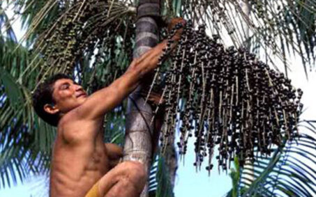 TEEBAgriFood Cadenas de Valor de Palmas Amazonicas fundacion natura