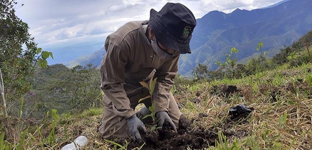 ¿Cómo Avanzan Las Compensaciones Ambientales De La Alianza Cenit Y Fundación Natura?